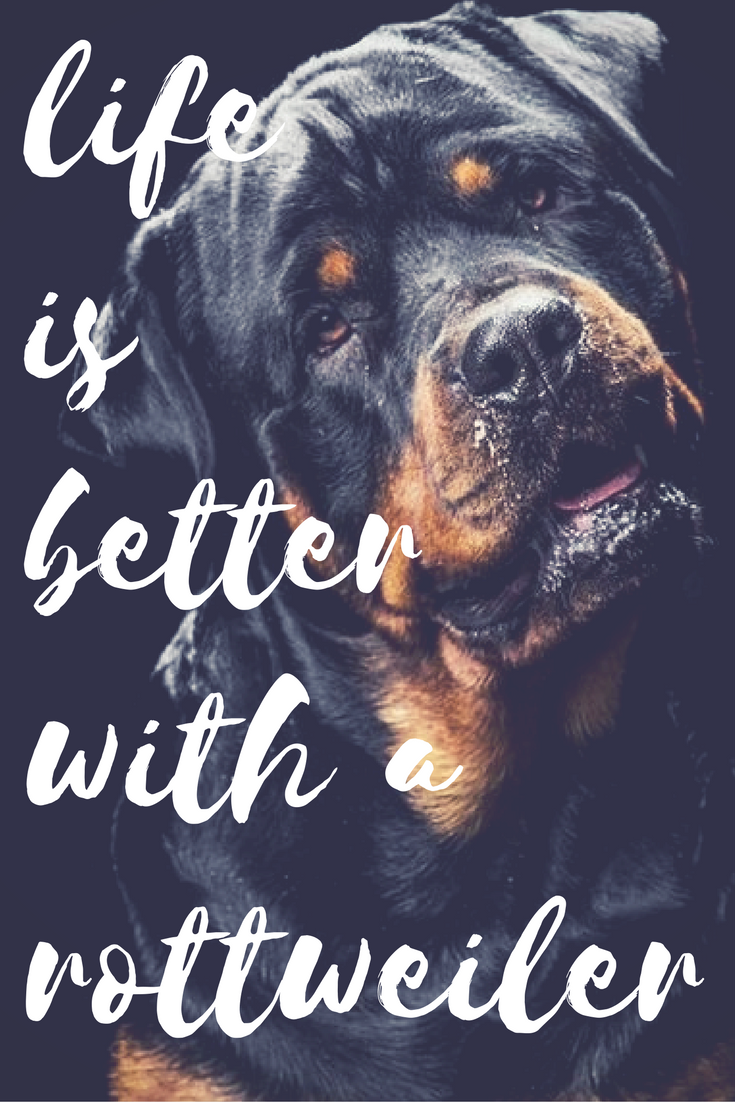 See More At Https Mypupboutique Com Collections Rottweiler Rottweiler Rottweiler Rottweiler Love Rottweiler Dog