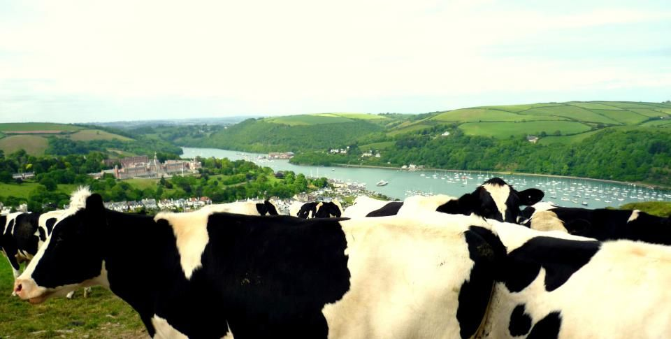 Dartmouth is a great town to explore! You can get there from Torquay by steam train, bus, boat, or all three!