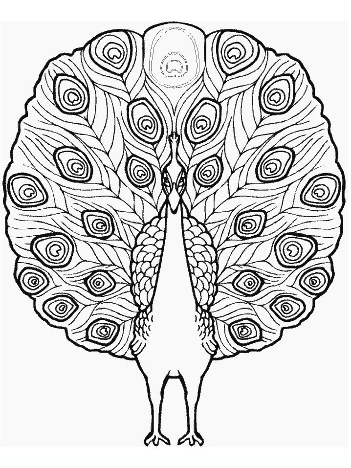 peacock Adult coloring pages | PAVO REAL | Pinterest | Bordado ...