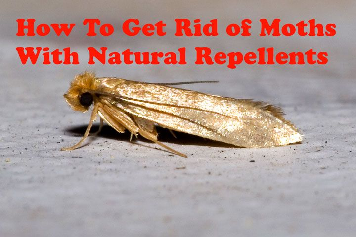 How To Get Rid Of Moths With Natural Repellents You Can Make Sachets To Stash In Drawers Trunks Or Hang In Closets Getting Rid Of Moths Moths In Closet Moth