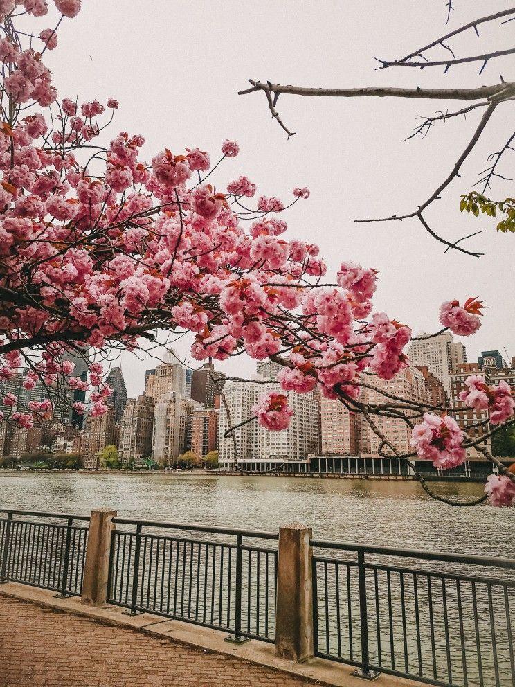 Spring In New York Wallpaper Spring In New York New York Wallpaper Wallpaper