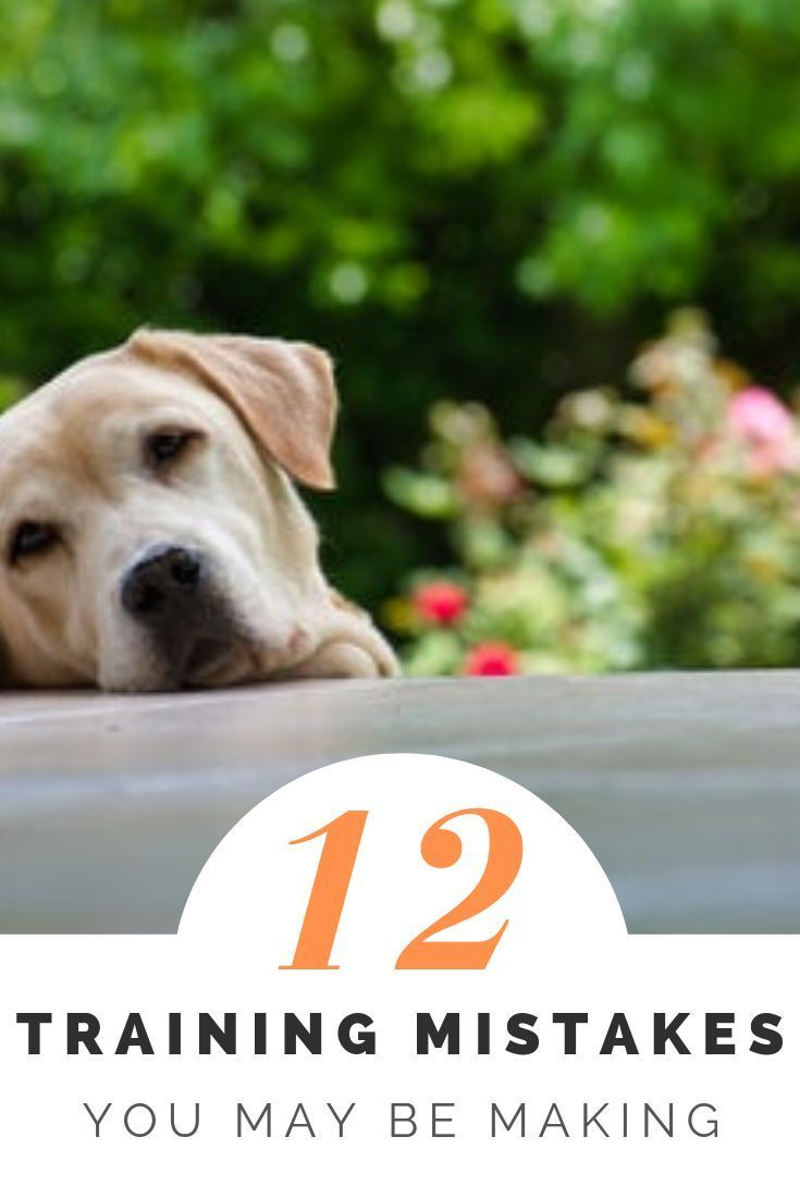 Dog Training Ideas For Puppies Dogtrainingrevolution 4213312656