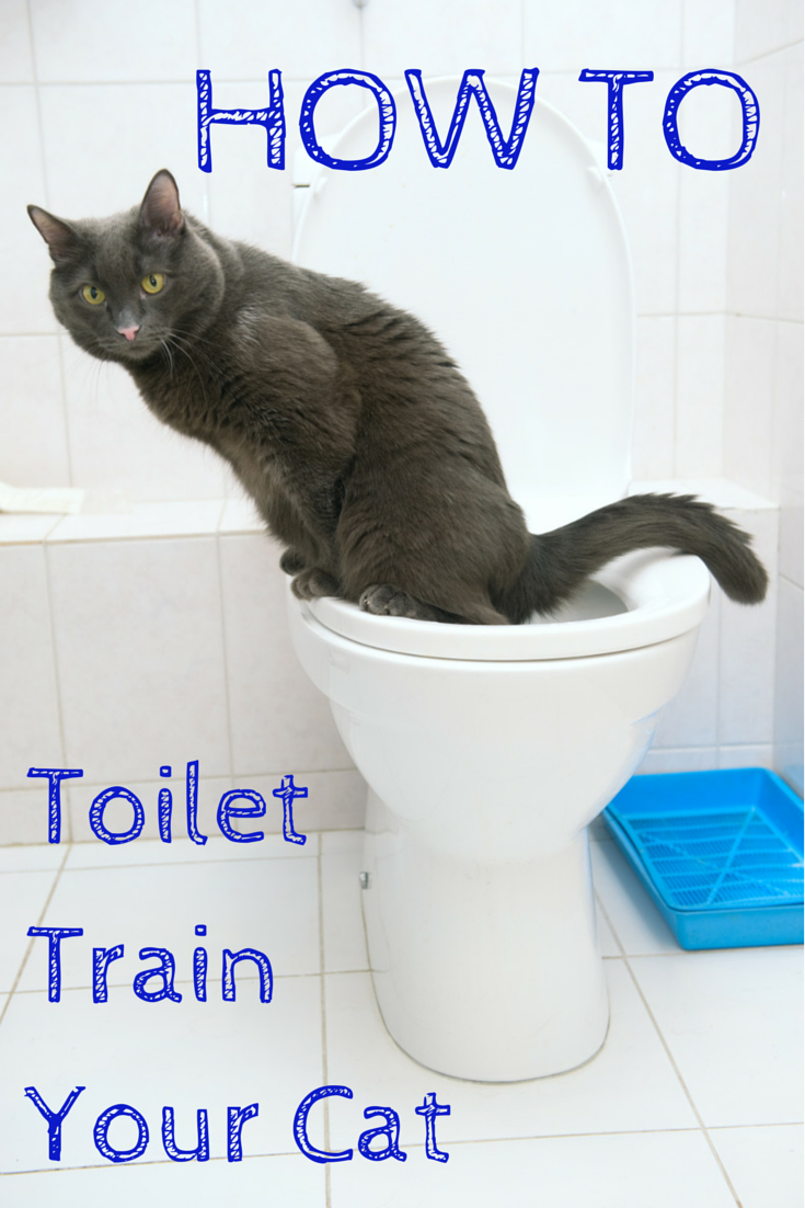 tired of scooping the litter box that litter box smell