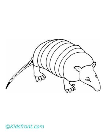 Armadillo Facts And Coloring Pages School Armadillo Color