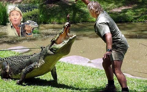 steve irwin simpsons