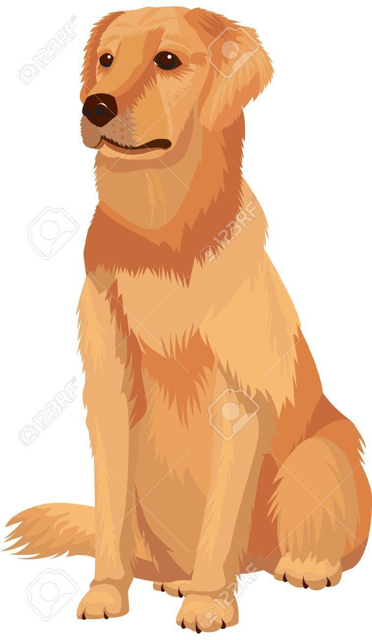 5 636 Labrador Retriever Cliparts Stock Vector And Royalty Free