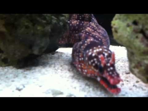 Pin On Dragon Moray Eel