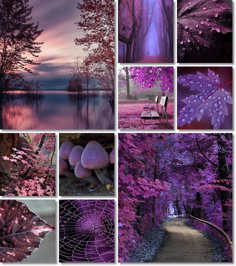 Подборка фиолетовых фотографий