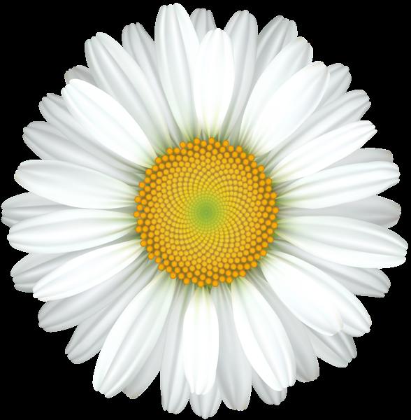 Daisy Flower Transparent Clip Art Image Art Images Clip Art Flower Painting