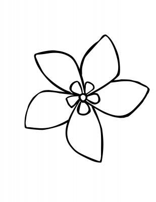 Jasmine flower simple drawing