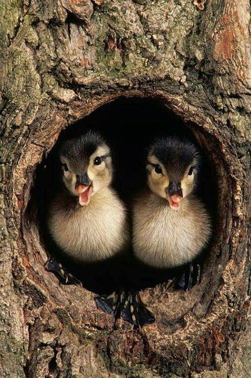 Preciosos   Animals n birds - love them!   Pinterest   Bird, Animal ...