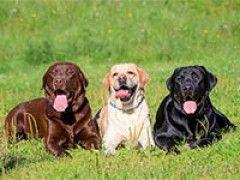 """""""Haustier-freundliche"""" Hunde"""