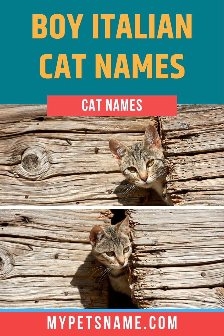 Boy Italian Cat Names In 2020 Cat Names Kitten Names Boy Cat Names