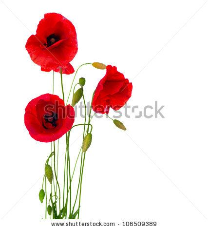 Red poppy flower isolated on a white background stock photo red poppy flower isolated on a white background mightylinksfo Choice Image