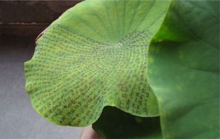 ink on lotus leaf by Charwei Tsai