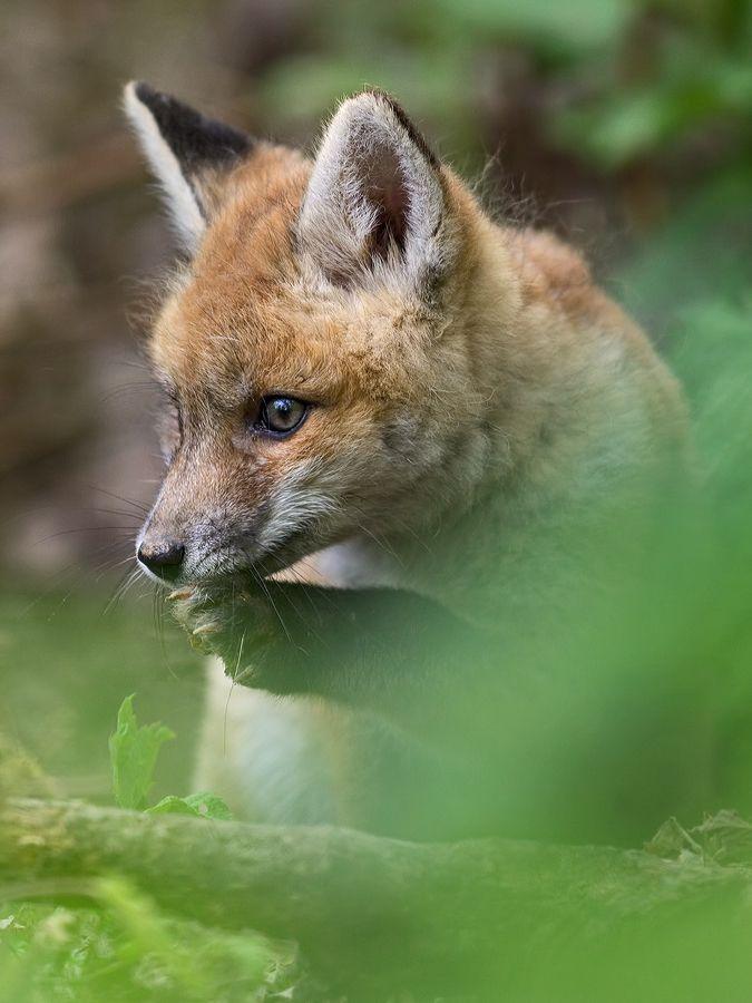 Sorgenkind Forum Fur Naturfotografen Susseste Haustiere Niedliche Tierbabys Susse Tiere