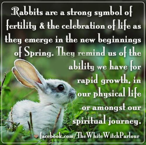 White rabbit meaning symbolism