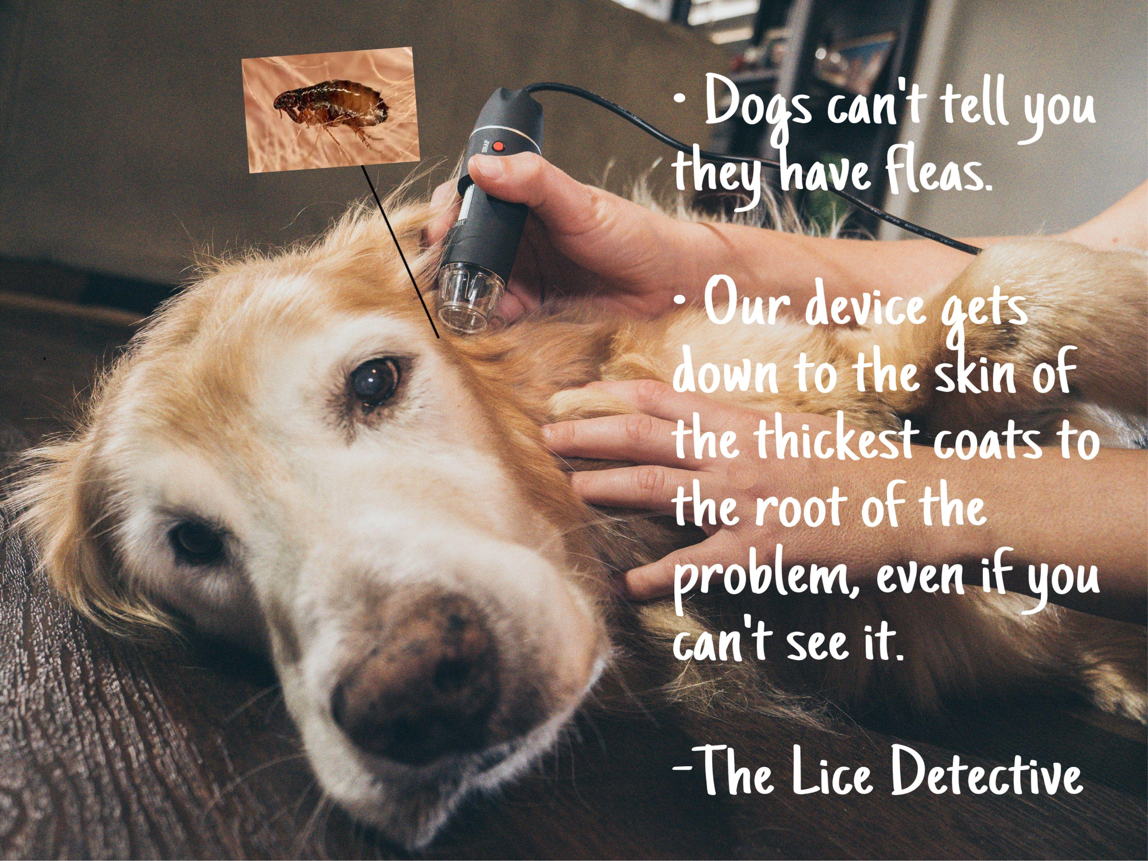 Pet Diagnosis Kit LiceDetective Dog skin, Pets, Pet health