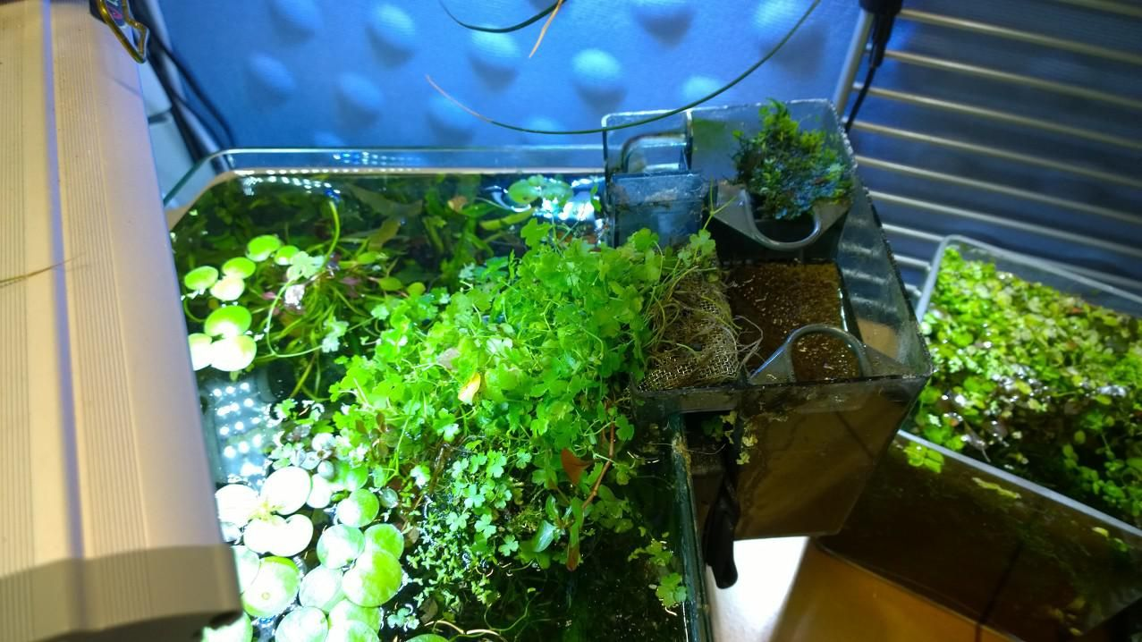 Revamp Planted Hob Spillway For Aquaclear Hobs Updated Again Cleaning Aquascape Cleaning Revamped