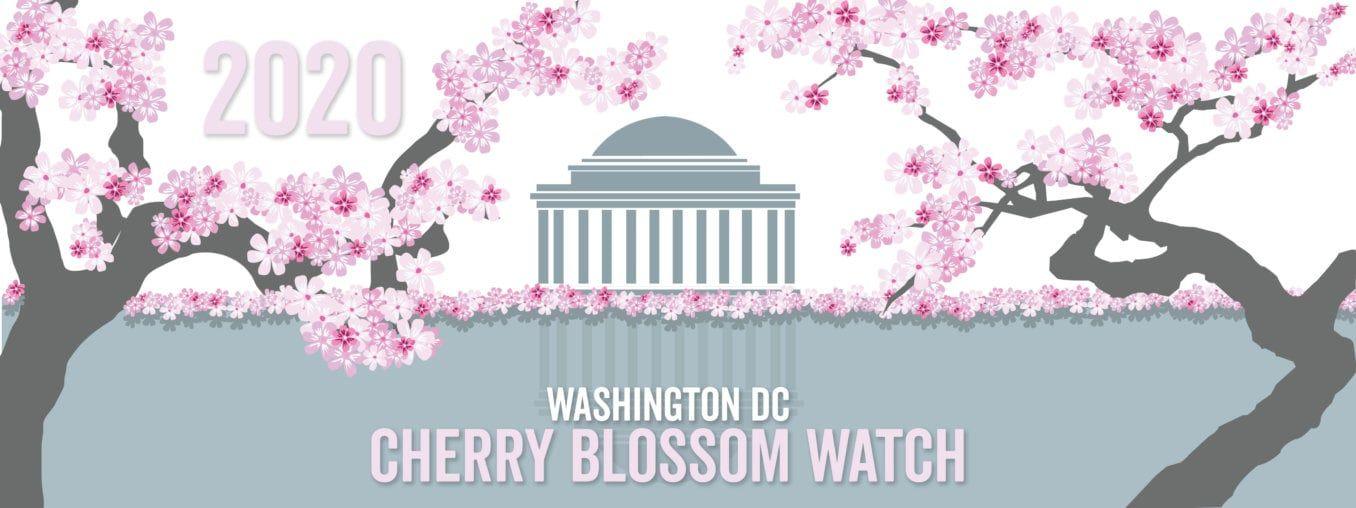 Dc Cherry Blossoms 2020 Header Image In 2020 Washington Dc Cherry Blossom Dc Cherry Blossom