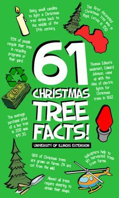 Superior 61 Fun Christmas Tree Facts For Your Amusement This Holiday Season!