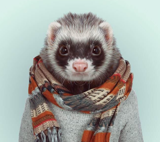 HAHAHAHA!!!!  want to do this to both my ferrets!