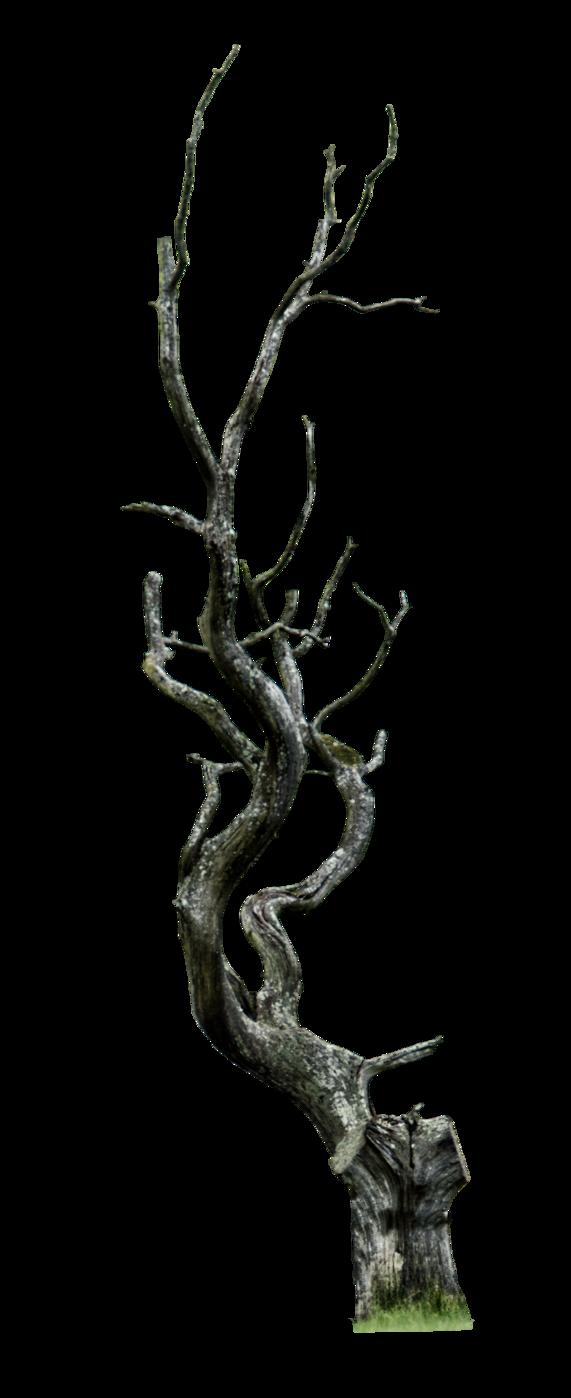 Dead Tree Png By Aledjonesstocknart Twisted Tree Vine Drawing Dead Tree Tattoo