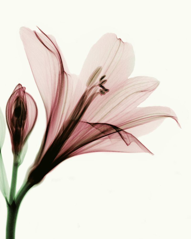 X Ray Flowers Able Flower By Coopr On Deviantart
