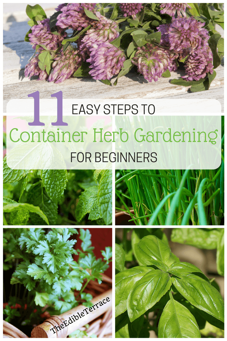 Easy 11 Steps To Container Herb Gardening For Beginners 400 x 300