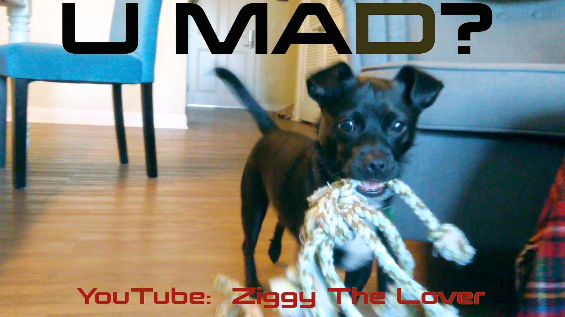 Ziggy Plays Fetch!