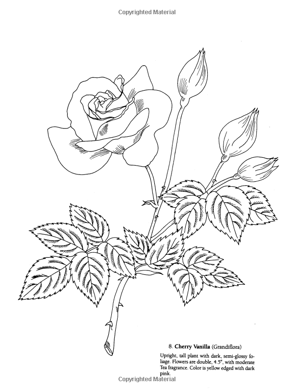 Favorite Roses Coloring Book Dover Nature Coloring Book Ilil Arbel Coloring Books Flowers 9780 Flower Coloring Pages Coloring Pages Animal Coloring Pages