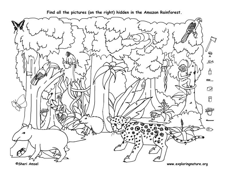 Find The Things Hidden In The Amazon Rainforest Then Color Animal Coloring Pages Animal Coloring Books Hidden Pictures