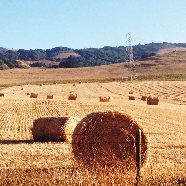  Hay Bale Perfection 