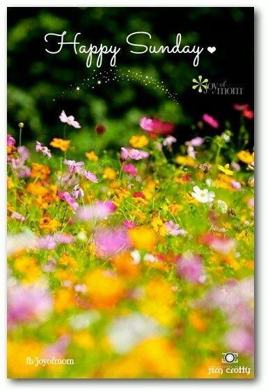 Happy Sunday Quotes Quote Flowers Butterflies Days Of The Week Sunday Sunday Quotes Happy Sunday Happy Sunday Images Happy Sunday Happy Sunday Quotes