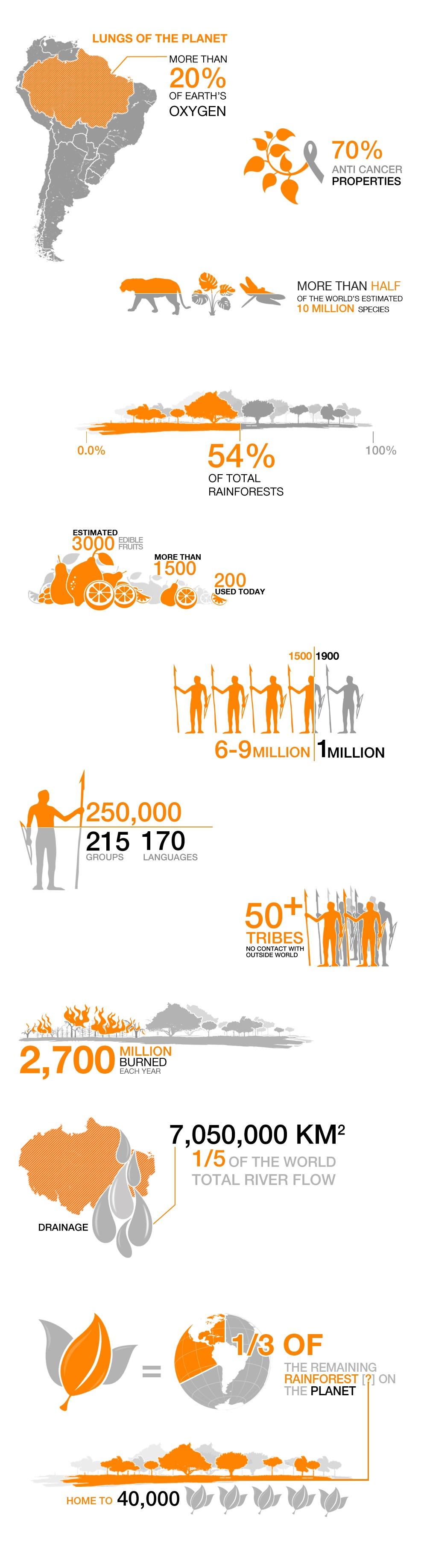 Amazonia Infographic