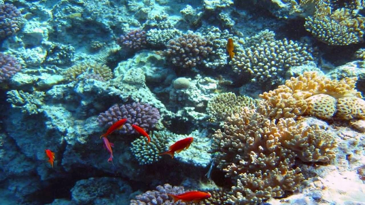 BEYOND A DREAM - LORIE LINE   Coral reef pictures, Fish ...