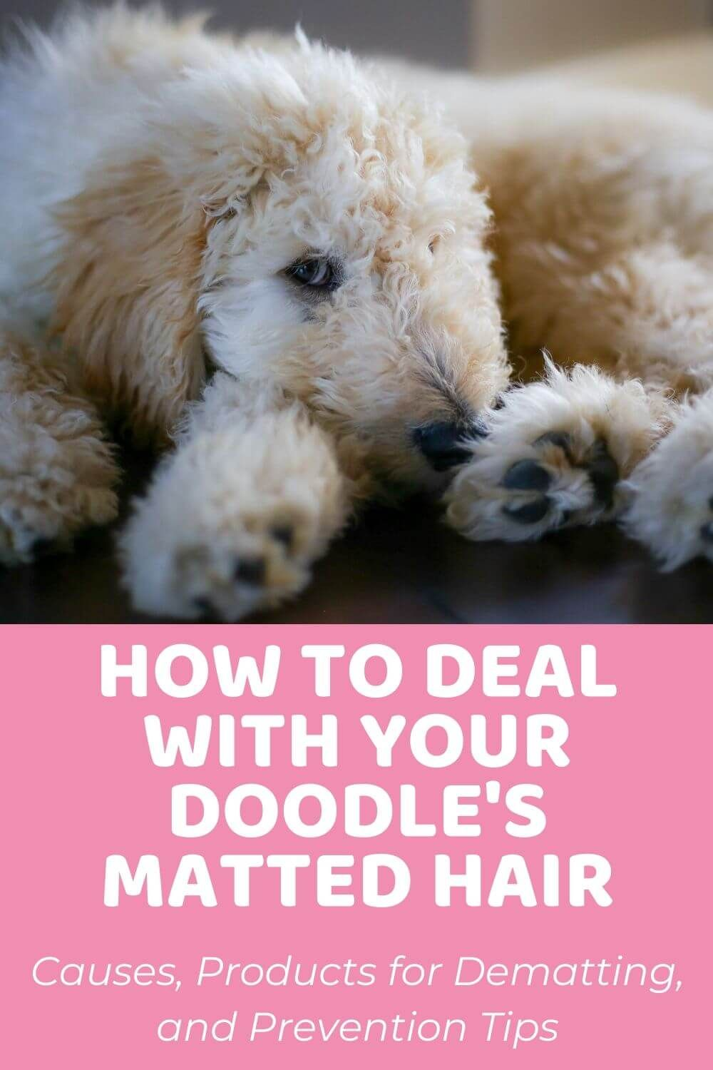 Ultimate Guide To Dealing With Matted Dog Hair On Your Doodle In 2020 Matted Dog Hair Dog Hair Goldendoodle