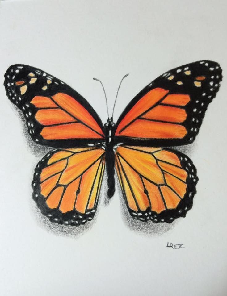 Colored pencil Monarch butterfly by Laurie Rejc ...