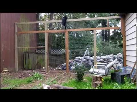 How to keep your cats from climbing a fence - They can't climb this cat  proof fence. - YouTube - How To Keep Your Cats From Climbing A Fence - They Can't Climb This