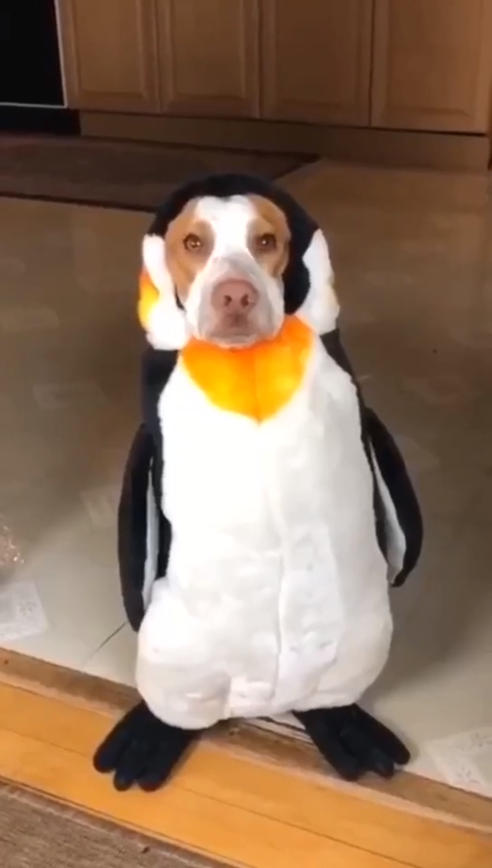 Dog Halloween Penguin Pet Costume(BUY 1 GET 2ND 10% OFF) #funnydogs