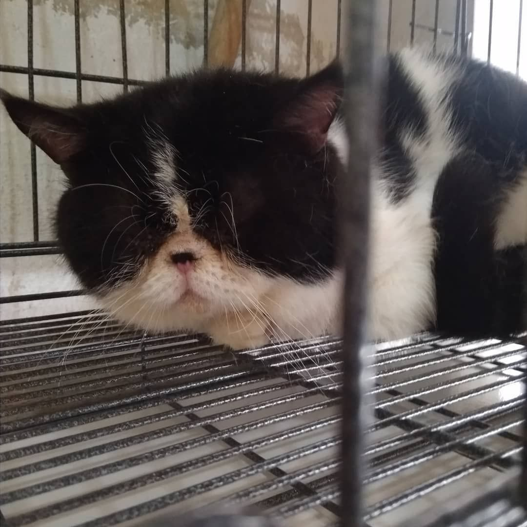 Welcome Back Logan Udah Ganteng Nih Pesek Passien Grooming Untuk Pemesanan Bisa Via Wa 085733432238 Atau Langsung Outlet Yang A Cat Food Cats Animals