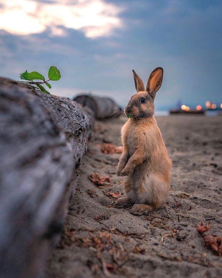 الصور حيوانات صور حيوانات اليفة Funny Animal Pictures Animal Pictures Funny Animals