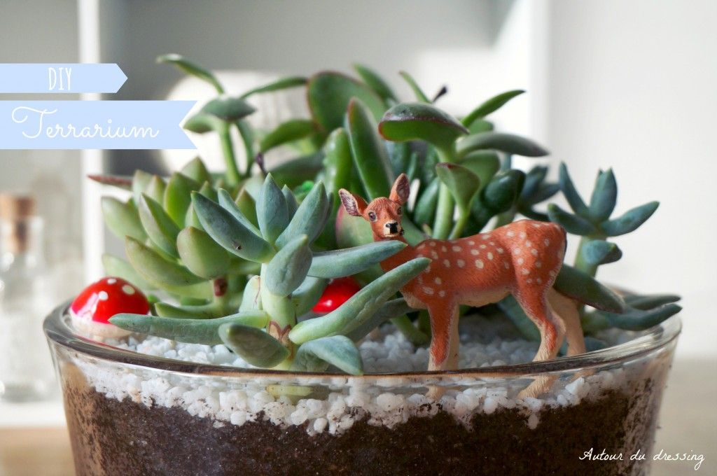 diy terrarium succulente noel botanic 2 plantes pinterest terrarium objet deco maison et. Black Bedroom Furniture Sets. Home Design Ideas