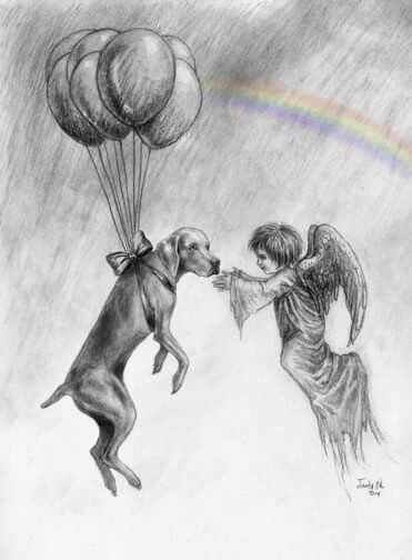 Missing My Sweet Boy Williepete Angel Guiding Dog To The Rainbow