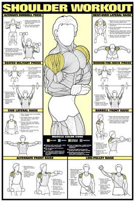 Back Workout Professional Fitness Instructional Wall Chart Poster – Fitnus Corp