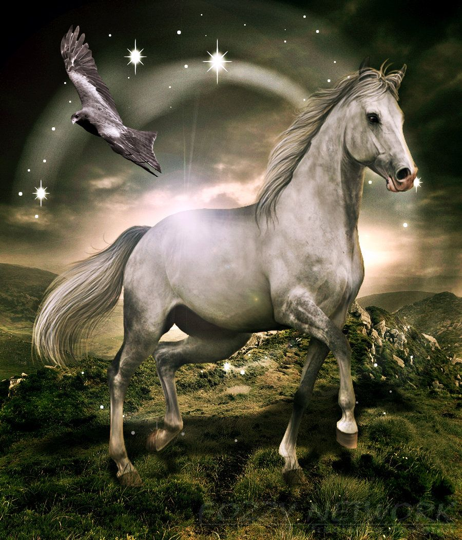 White Horse Art White Horse Fantasy By Fozzynetwork Horses