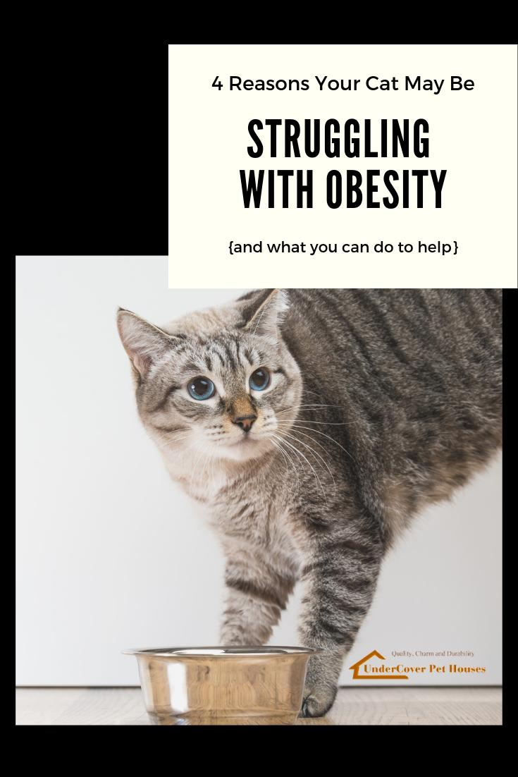 8f7c19ad1d37af23898817ef4352dbe4 - How To Get My House Cat To Lose Weight