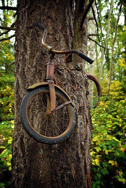 "1950's bike ""eaten"" by a tree  #Bike, #Tree"