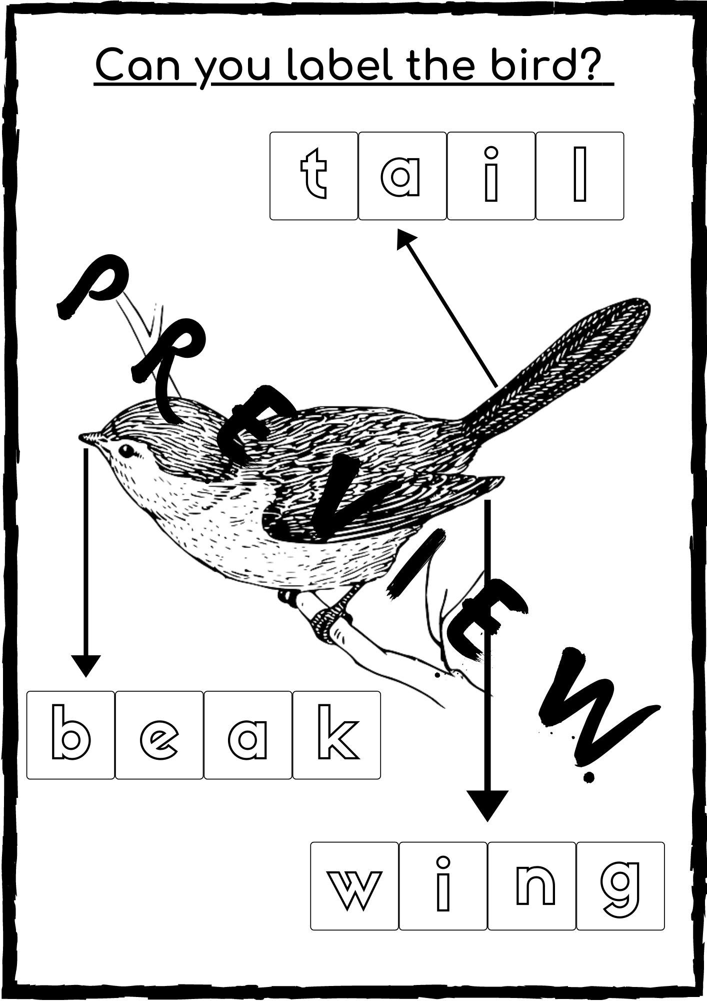 Bird Color And Label Activity Sheet Esl Trong