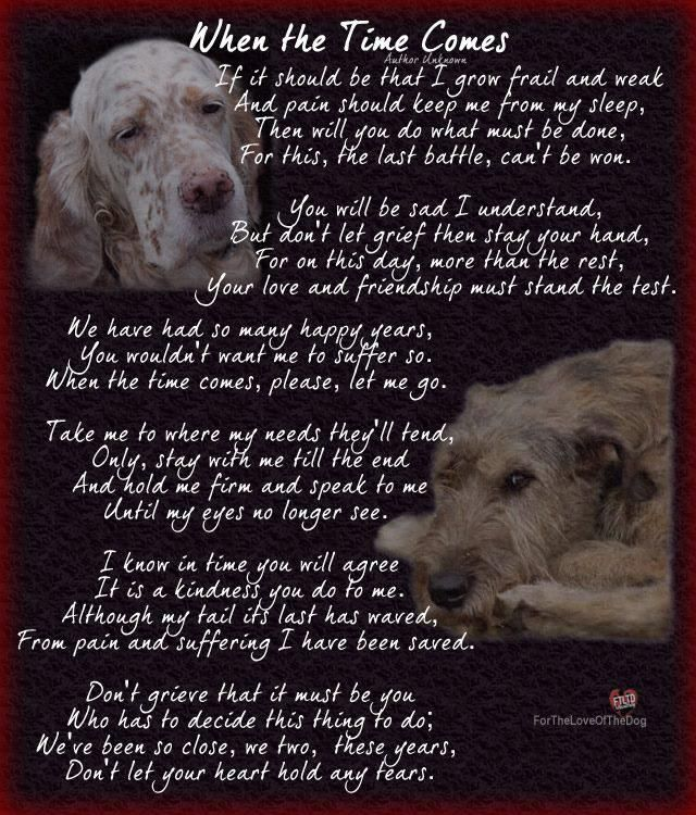 This Is Heartbreaking I Dread When This Day Comes I Don T Know If I Ll Have The Strength To Do It Dog Poems Pet Remembrance Pet Loss Grief